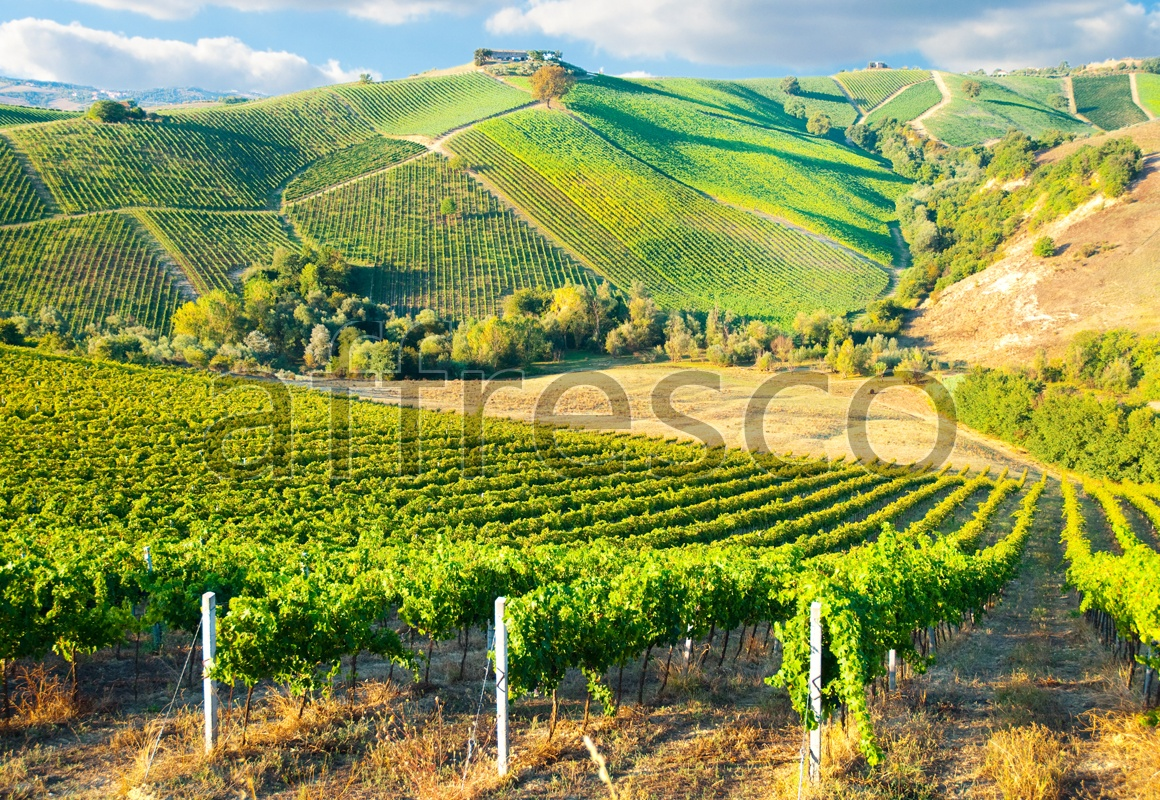 ID13447 | Pictures of Nature  | Vineyard at the hill | Affresco Factory