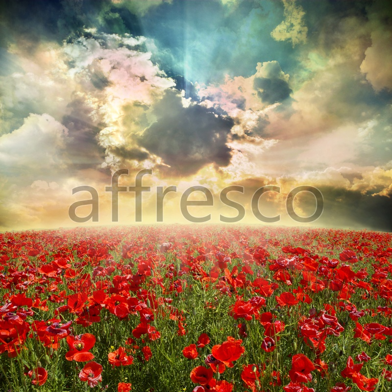 ID12399 | Pictures of Nature  | Field poppies | Affresco Factory